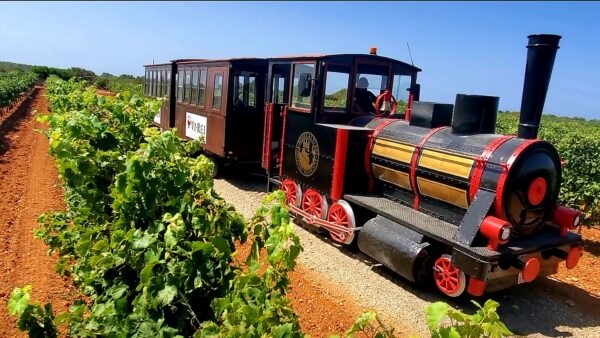Vineyard guided train tour and wine tasting