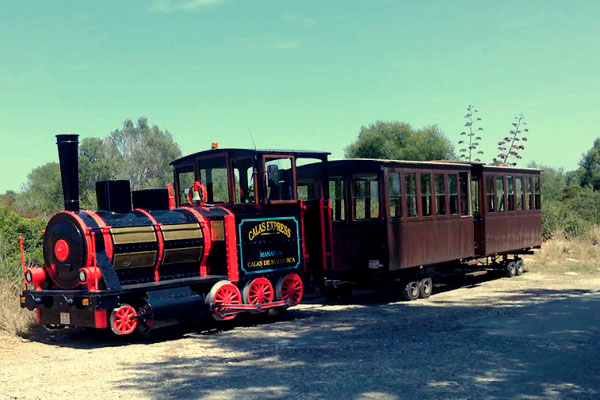 Vineyard tour with small train, guided tour and tasting